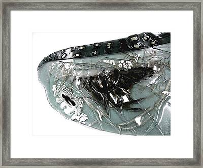 Detail Mayfly Wing Framed Print by Sarah King