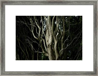 Detailed View Of The Branches Of A Tree Framed Print by Todd Gipstein