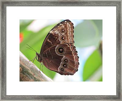 Detailed Wings Framed Print