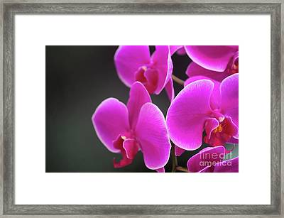 Details In Soft Colors  Framed Print