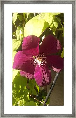 Details In Foliage Framed Print by Connie Young