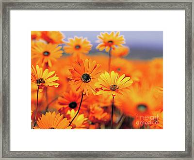 Details In Orange Framed Print