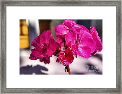 Details In Pink  Framed Print