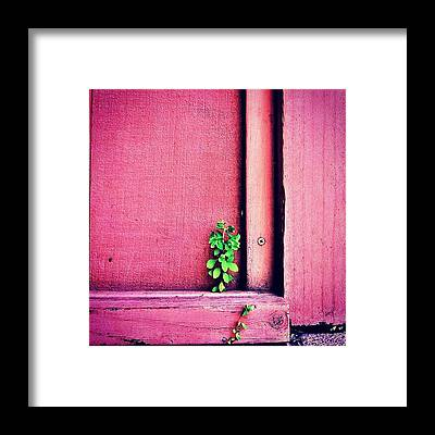 Plants Framed Prints