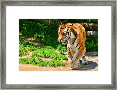 Detroit Tiger Framed Print by Paul Bartoszek