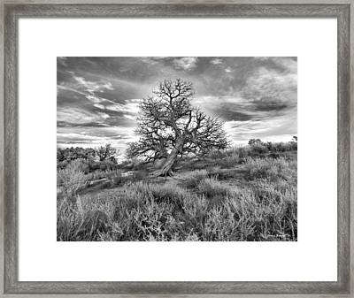 Devils Canyon Tree Framed Print