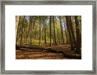 Framed Print featuring the photograph Devil's Hopyard Clearing by Kirkodd Photography Of New England