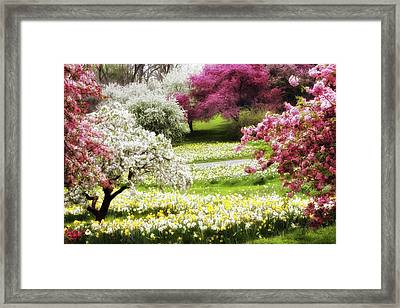 Divine Daffodils Framed Print by Jessica Jenney