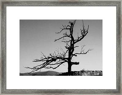 Devoid Of Life Tree Framed Print