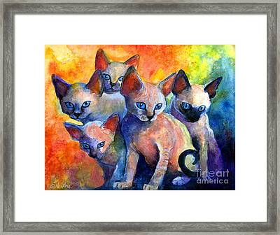 Devon Rex Kitten Cats Framed Print by Svetlana Novikova
