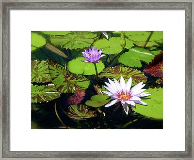 Devotion Framed Print by Amy Strong