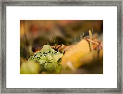 Dew And Gingko  Framed Print by Bulik Elena