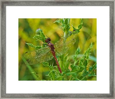 Dew Covered 5904 Framed Print by Michael Peychich