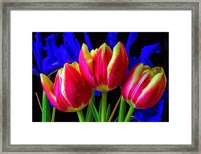 Dew Covered Tulips And Iris Framed Print