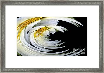 Dew Covered White Waterlilies Warp Abstract Framed Print