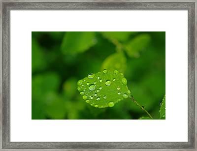 Dew Dappled Leaf Framed Print by Jeff Swan