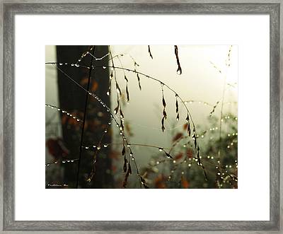Dew Drop Garland Framed Print