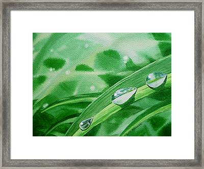 Dew Drops Framed Print by Irina Sztukowski