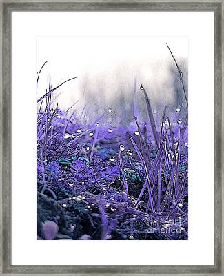 Dew Drops Magic Two Framed Print by Robert Ball