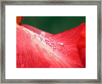 Dew Drops On A Wave Of Red Framed Print