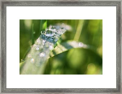 Dew Drops On Fresh Spring Grass Framed Print