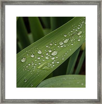 Framed Print featuring the photograph Dew Drops On Leaf by Jean Noren