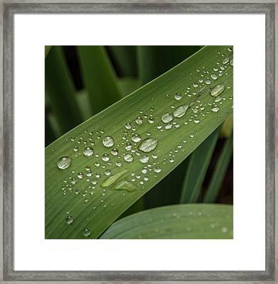 Dew Drops On Leaf Framed Print