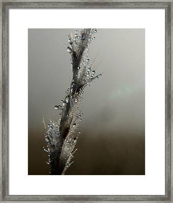 Dew Drops Renew Framed Print