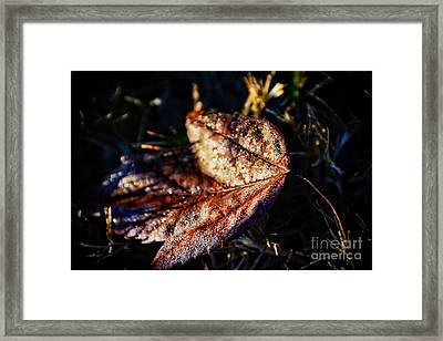 Dew Drops Sparkling And Showing Life On A Leaf -georgia Framed Print