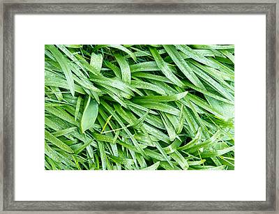 Dew Drops Framed Print by Tom Gowanlock
