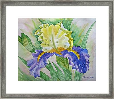 Dew Drops Upon Iris.2007 Framed Print by Natalia Piacheva