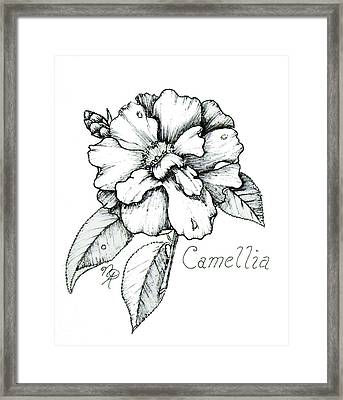 Dew Kissed Camellia Framed Print