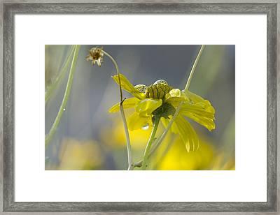 Dew On A Desert Bloom Framed Print