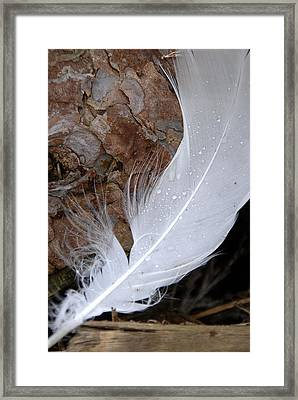 Dew On A Feather Framed Print by Robert Lacy