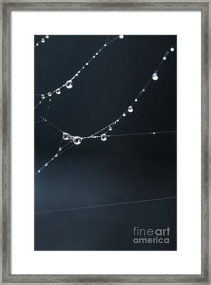 Dew On Cobweb 001 Framed Print