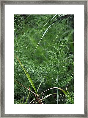 Dew On The Ferns Framed Print