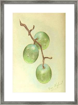 Dew On White Grapes Framed Print by Daniel Shuford