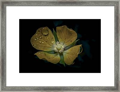 Dew To Drought 546 Framed Print