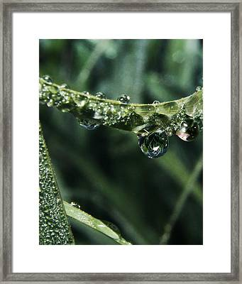 Dew To Drought 55 Framed Print
