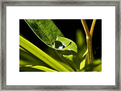 Dewdrop On A Leaf Framed Print by Michael Whitaker