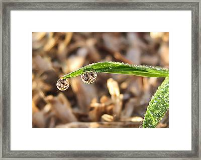 Framed Print featuring the photograph Dewdrops by Gouzel -