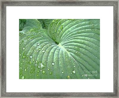 Dewdrops On A Hosta Framed Print by Addie Hocynec