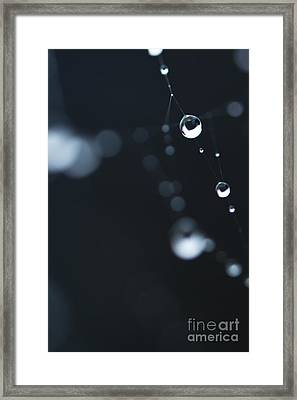 Dewdrops On Cobweb 004 Framed Print