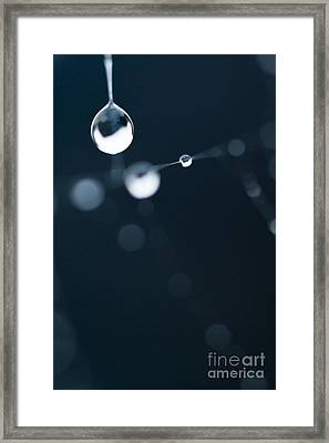 Dewdrops On Cobweb 005 Framed Print