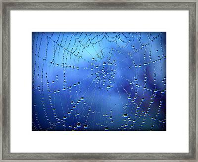 Dewed Web II Framed Print