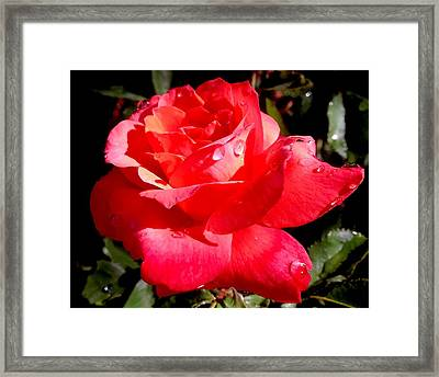 Dewly Noted Framed Print