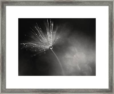 Dewy Dandelion Fireworks Framed Print