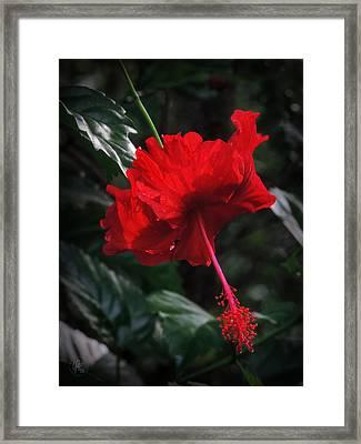 Dewy Hibiscus Macro 001 Framed Print by Lance Vaughn