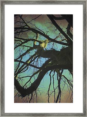 Framed Print featuring the photograph Dialogue  by Connie Handscomb