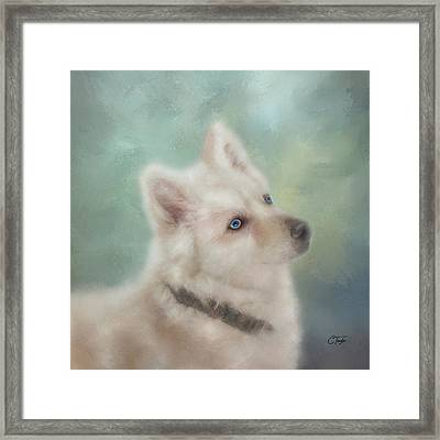 Diamond, The White Shepherd Framed Print by Colleen Taylor